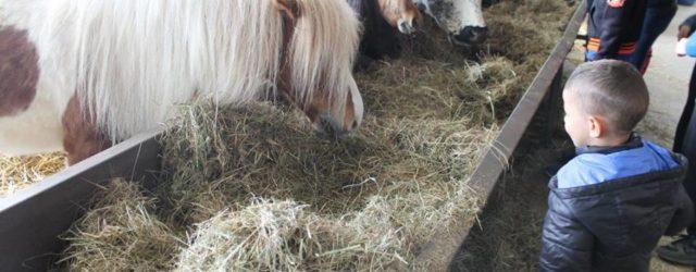 Mercredi 25 avril, sortie familialeà la ferme de Woimbey, une magnifique journée, petits et grands […]